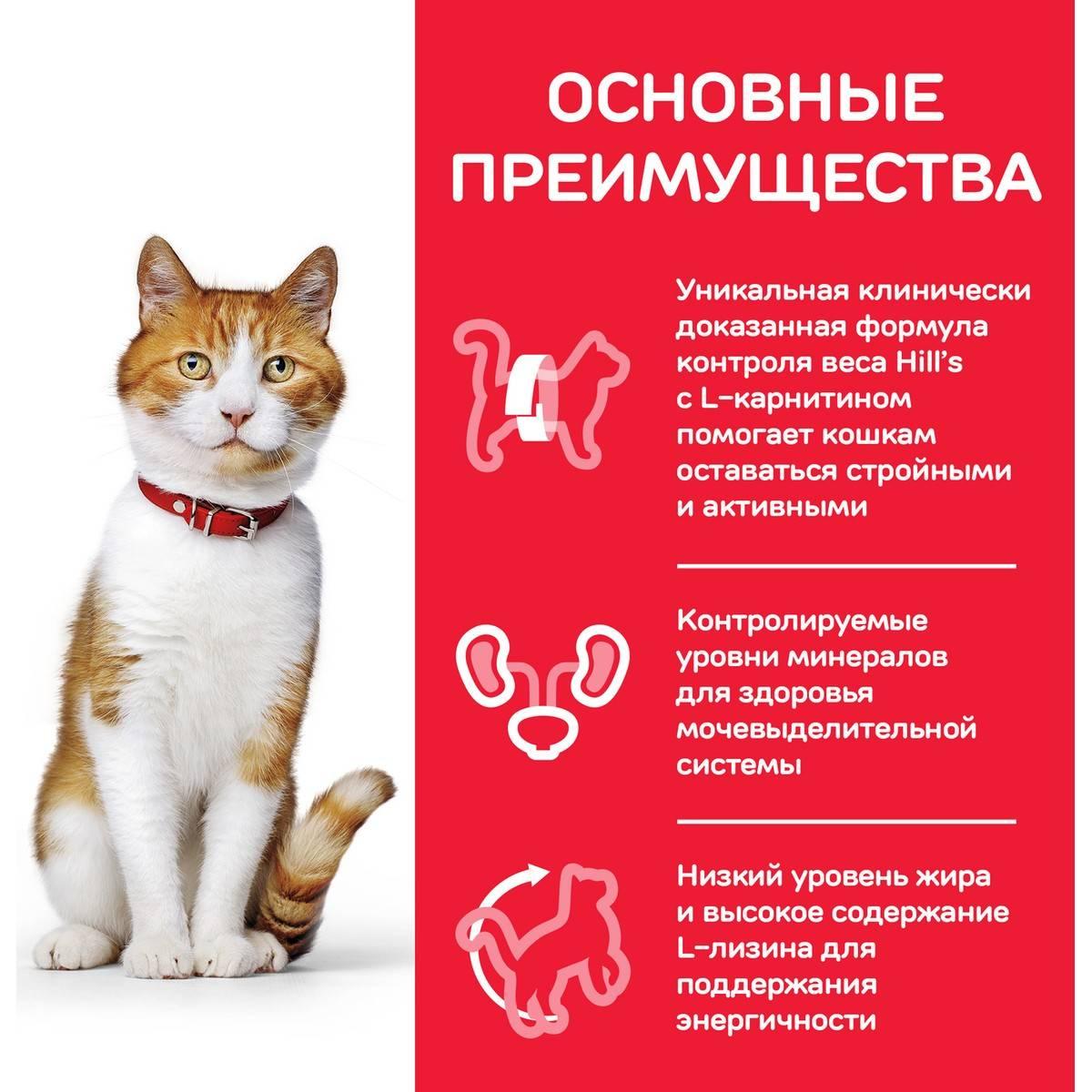 Химическая стерилизация кошек: виды, какая лучше