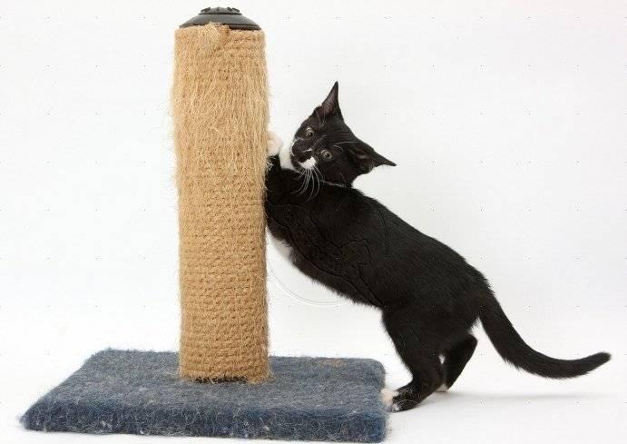 Как отучить кошку драть обои и мебель когтями - полезные советы