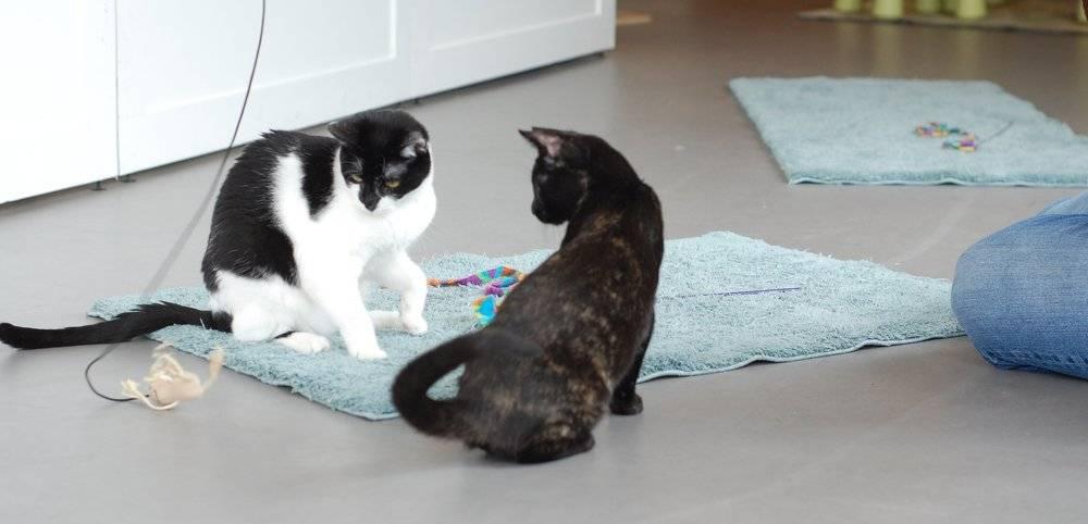 Как отучить кошку грызть провода - кошки