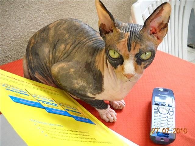 Температура тела кошки: норма и отклонения, способы измерения температуры, что делать, если температура у кошки повышена или понижена