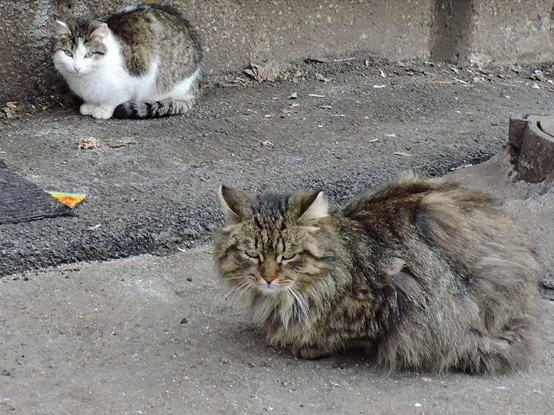 Как приручить дикого котенка или взрослую уличную кошку, как приучить такого кота к рукам и дому?