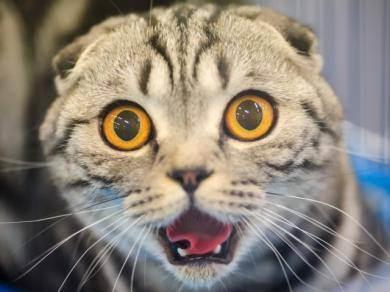 У кого интеллект выше у кошки или собаки? личное мнение и научные факты
