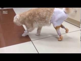 Почему кошка падает, припадает на лапы или заваливается набок?
