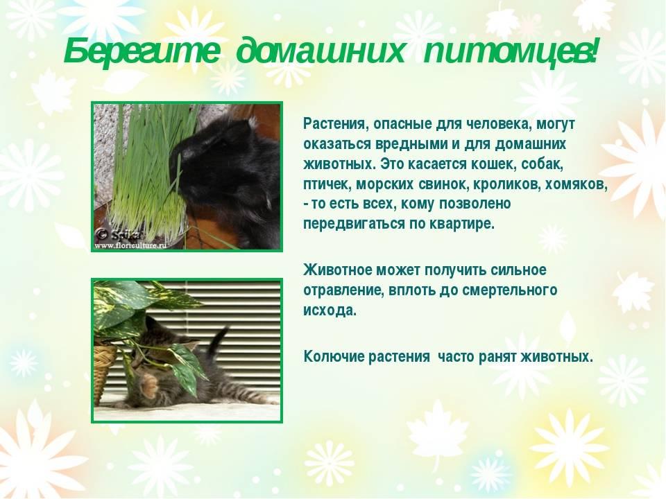 Самые ядовитые растения / виды, фото и описание