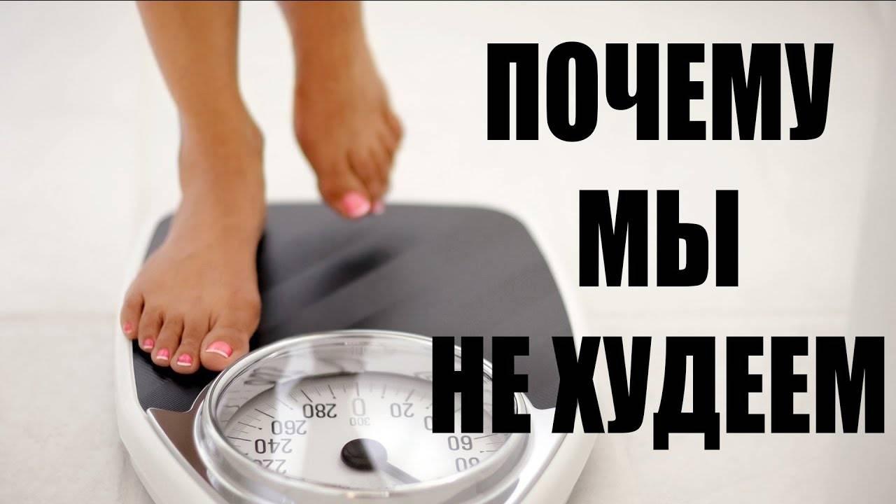 Кот плохо ест и худеет: причины потери веса при хорошем, нормальном и снизившемся аппетите, лечение