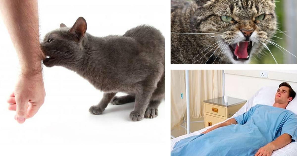 Как распознать бешенство у кошки? основные симптомы и признаки