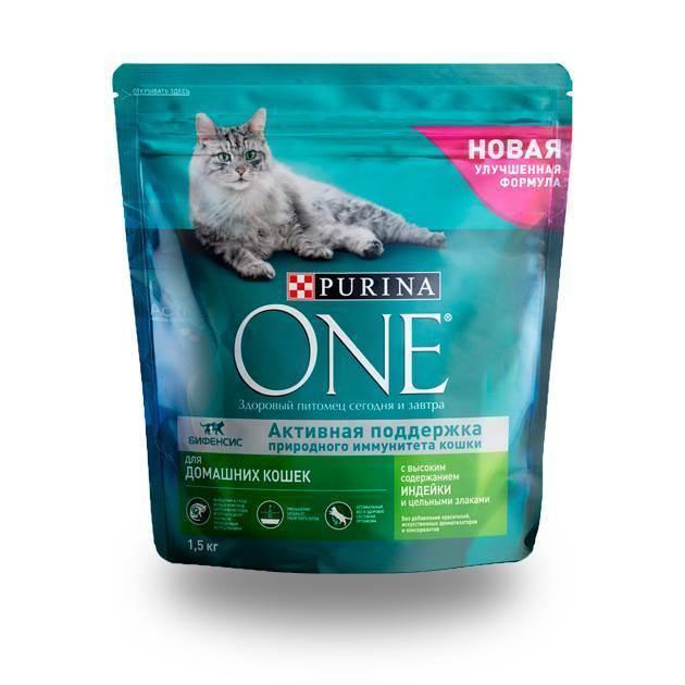 Что кошки любят есть больше всего, какой едой можно побаловать любимого кота?