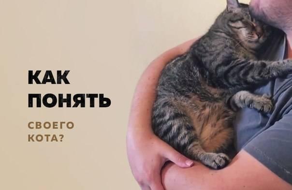 Как понять что кошка тебя любит