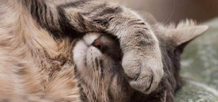 Мальт – паста для вывода шерсти у кошек. как правильно применять добавку?