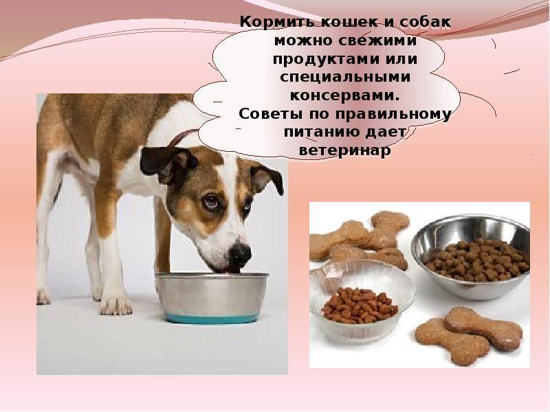 Можно ли собаке давать кошачий корм?