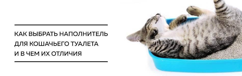 Как выбрать наполнитель для кошки