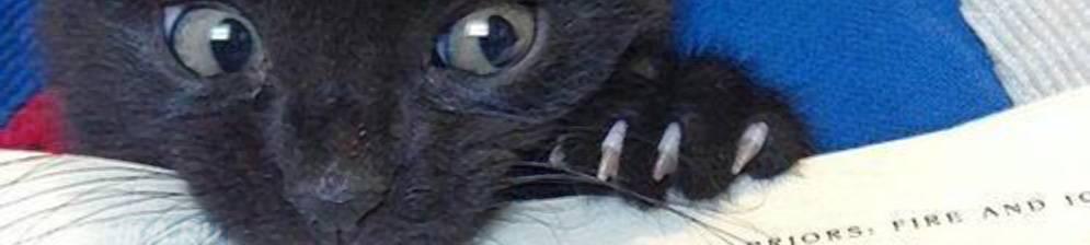 Сонник кошка нападает и кусает за руку. к чему снится кошка нападает и кусает за руку видеть во сне - сонник дома солнца