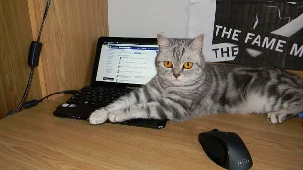 Кошка и табачный дым: примирение невозможно - о вреде сигаретного дыма на здоровье кошки - всё о кошках и котах