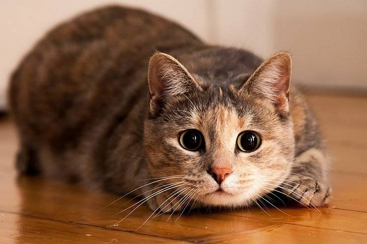 Как понять, что кошка трясет головой из-за болезни?