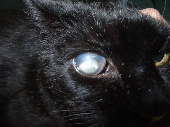Почему у кошки глаза наполовину закрыты пленкой? - настольный ветеринар