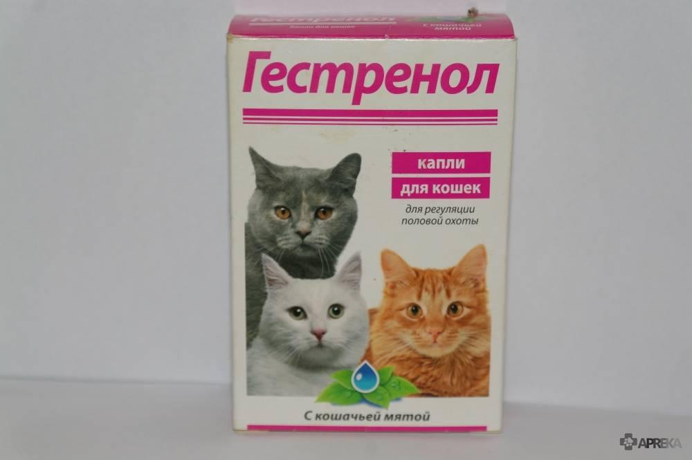 Экс-5 для кошек: показания и инструкция по применению, отзывы, цена