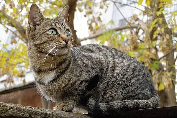 Дворовые породы кошек: почему стоит выбрать именно такого кота