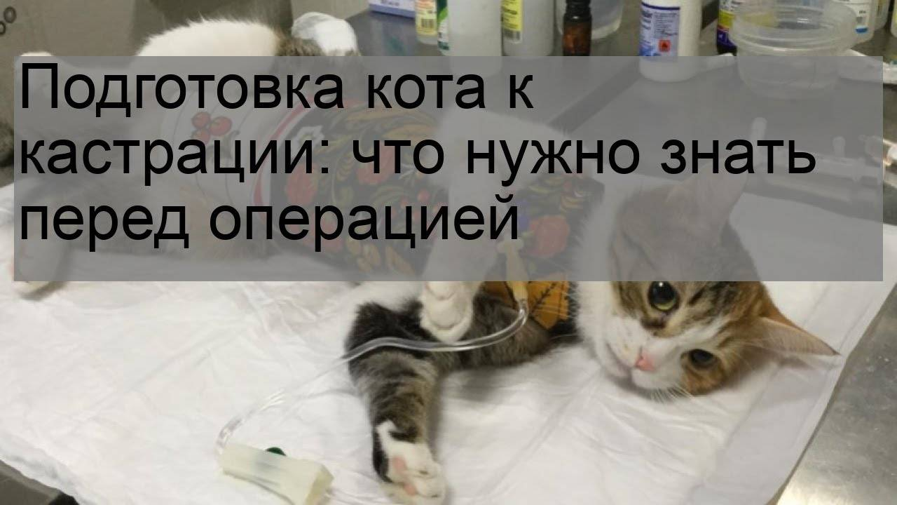 Почему кастрированный кот топчется и возбуждается