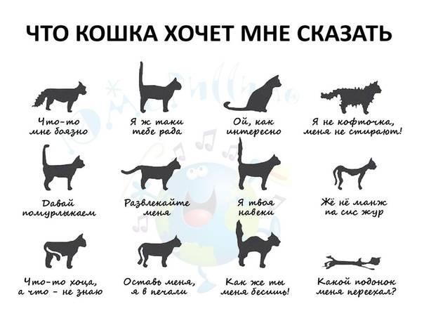 Что происходит в организме с кошки когда она гуляет
