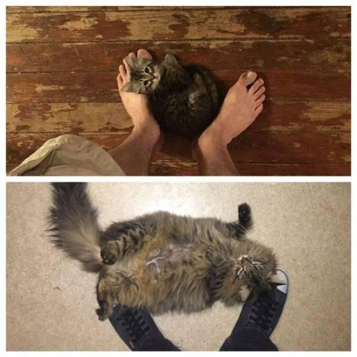 ᐉ кошка не дает коту что делать - zoomanji.ru
