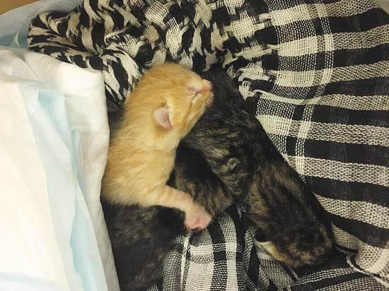 Самые спокойные породы кошек