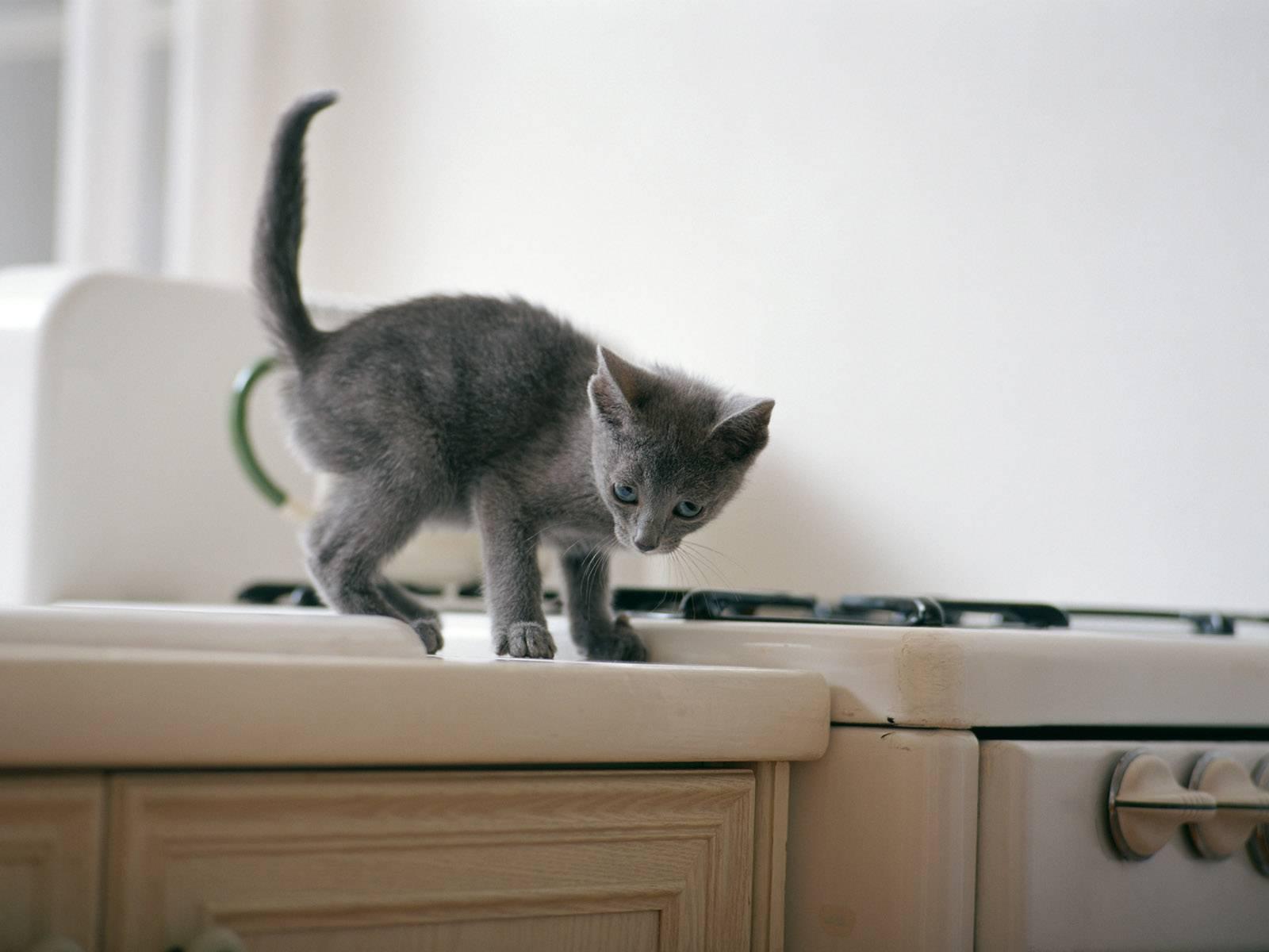 Как отучить кота лазить по столам? можно ли отучить кота лазить по столам?