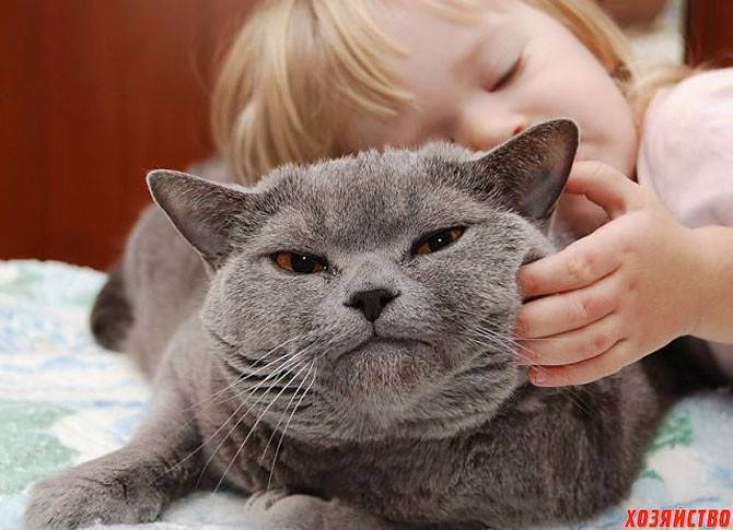 Анималотерапия или как лечат животные различные заболевания