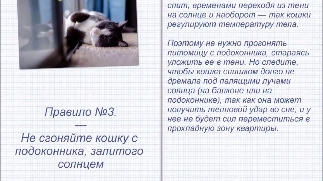 Как помочь кошке в жару в квартире. советы эксперта