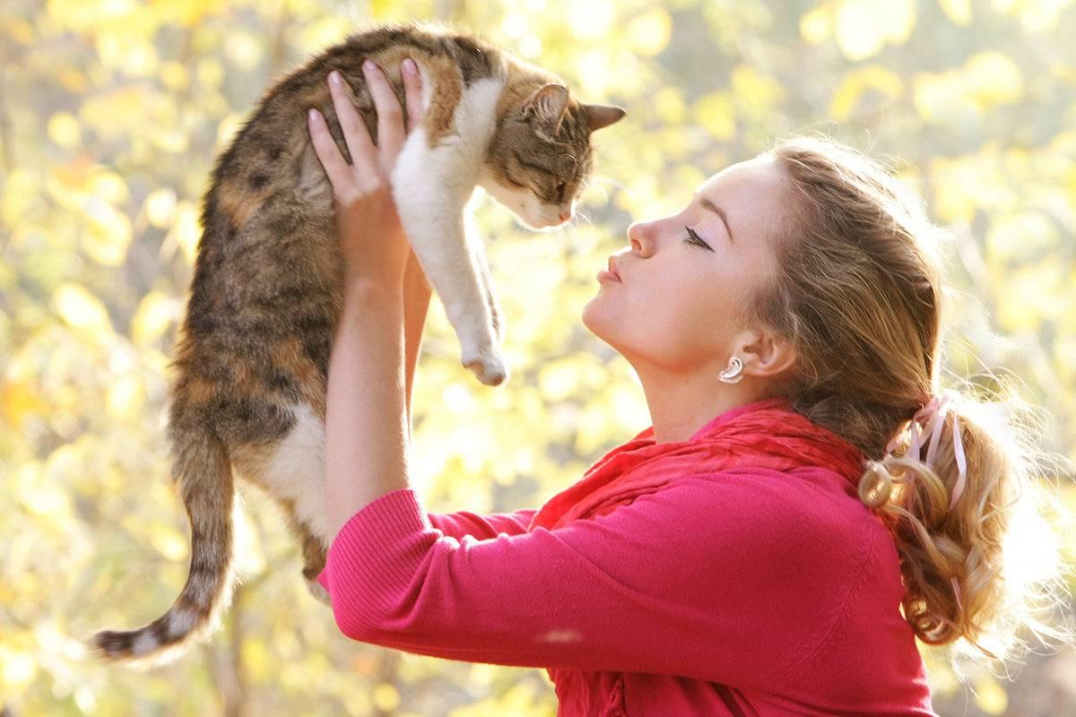 Как подружить двух кошек в доме и как долго они привыкают друг к другу?