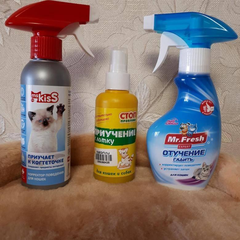 Как котенка приучить к туалету: секреты и полезные рекомендации