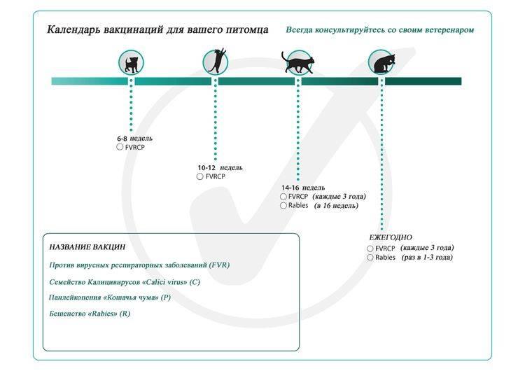 Особенности вакцинации котов: сроки введения прививок, выбор препарата