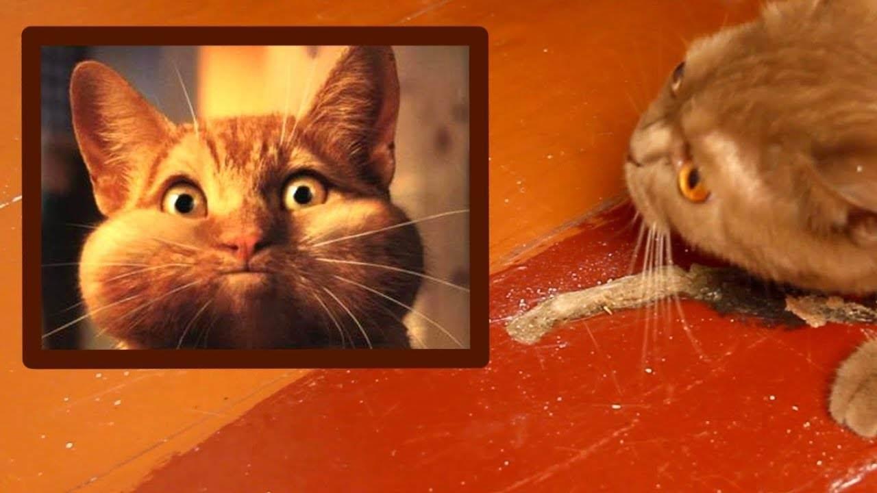 Кота рвет шерстью и кормам что делать