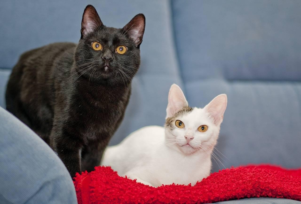 Породы пушистых и гладкошерстных рыжих котов с фотографиями и названиями, характер и особенности кошек такого окраса