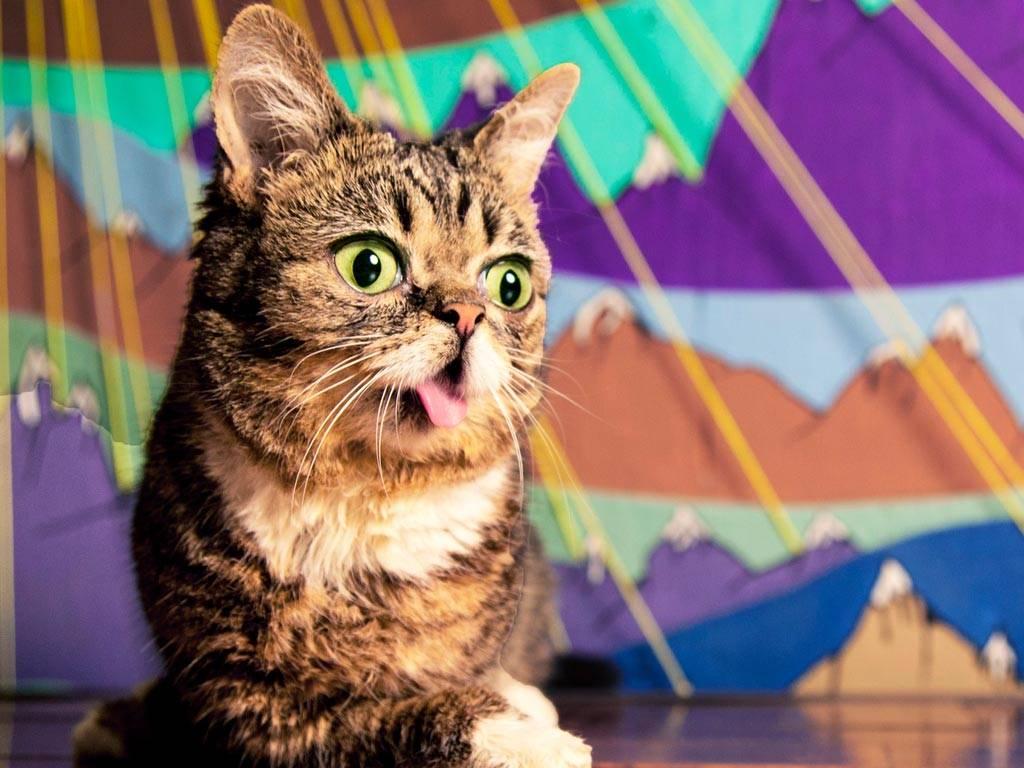 """""""взорвавшие youtube"""". самые знаменитые коты интернета и не толькосюжет"""