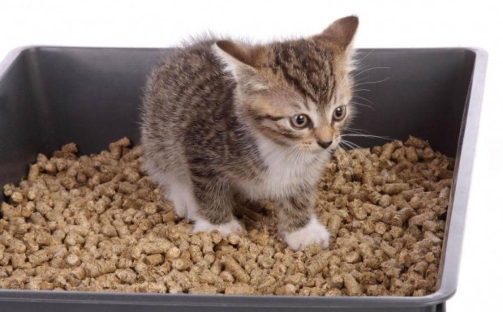 Растения, для которых подойдёт кошачий наполнитель: часть первая