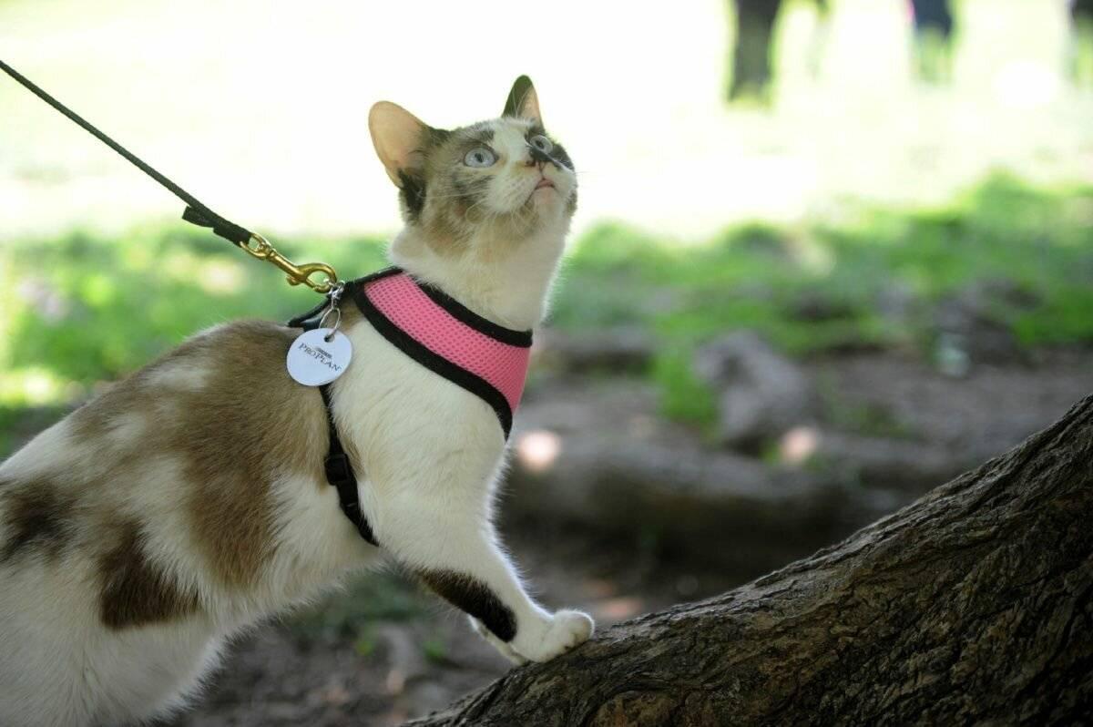 Поведение кошки, которая просит кота и способы, как её успокоить в домашних условиях