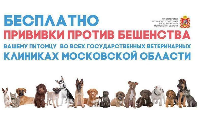 Первая прививка собаке от бешенства