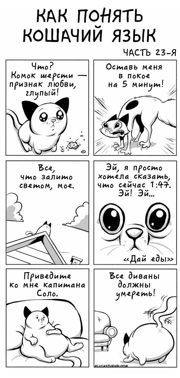 Как понять, что кошка тебя любит | zdavnews.ru