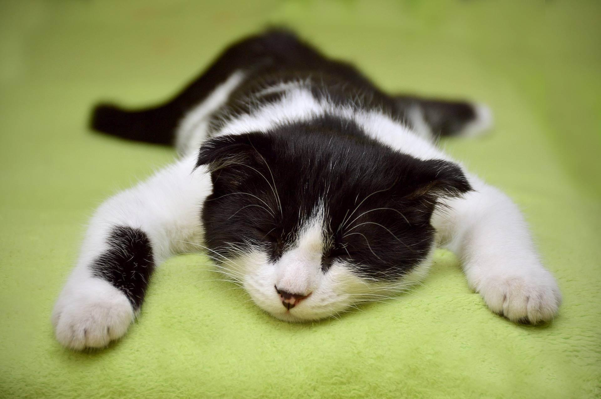 Чем помочь кошке в жару дома – 4 способа охлаждения питомца