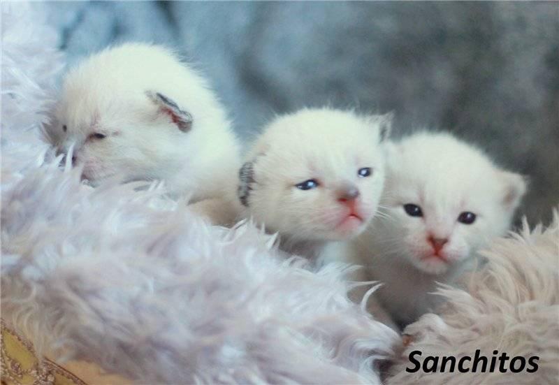 Ваш котёнок: забота и уход в первые месяцы жизни