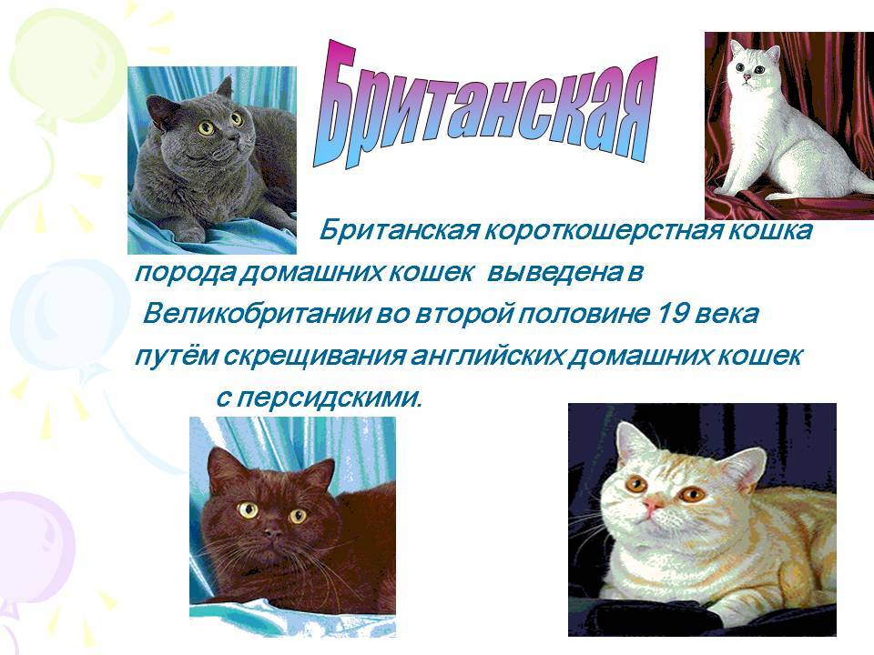 Короткошерстные кошки: названия пород, их описания и фото