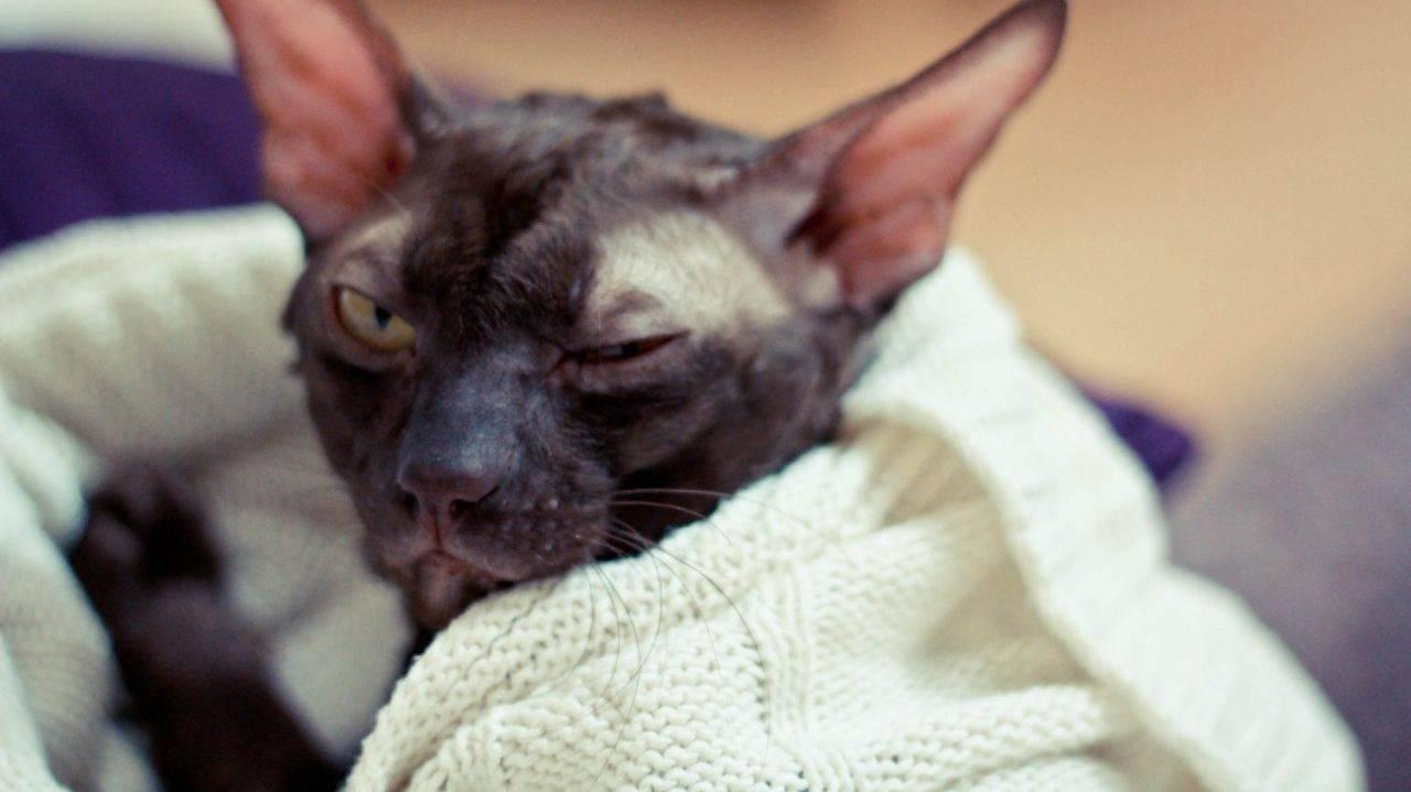 Хламидиоз у кошек - симптомы и лечение