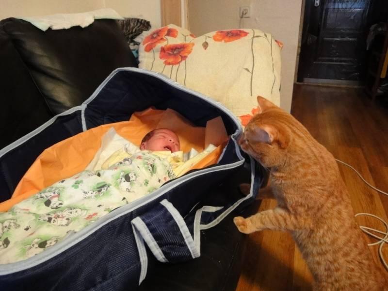 Почему коты спят с детьми и можно ли пускать кошку в кроватку к младенцу