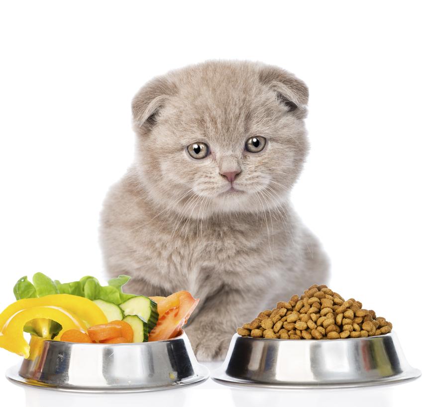 Чем кормить кастрированного кота: список разрешенных и запрещенных продуктов