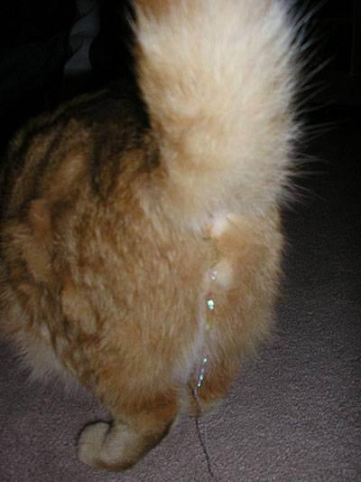Кот съел дождик с елки: что делать и нужно ли беспокоиться | кот и кошка