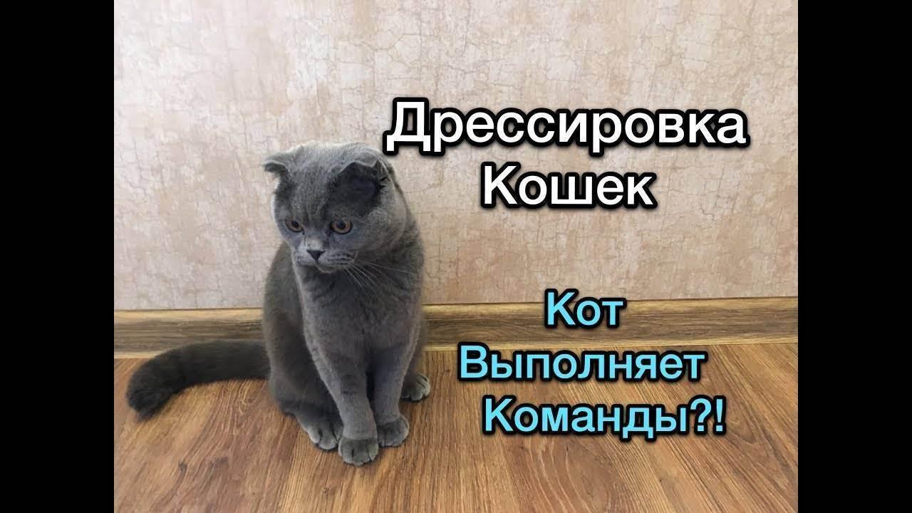 Как дрессировать кошку