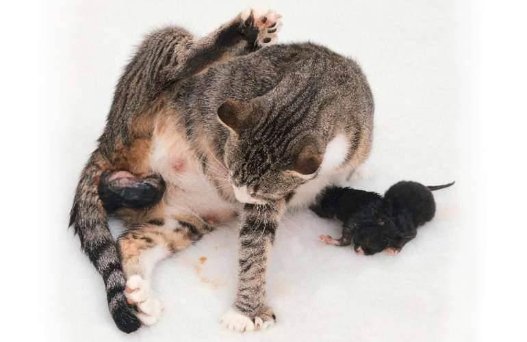 Низкая температура у кота: причины понижения у котят, взрослых и старых кошек