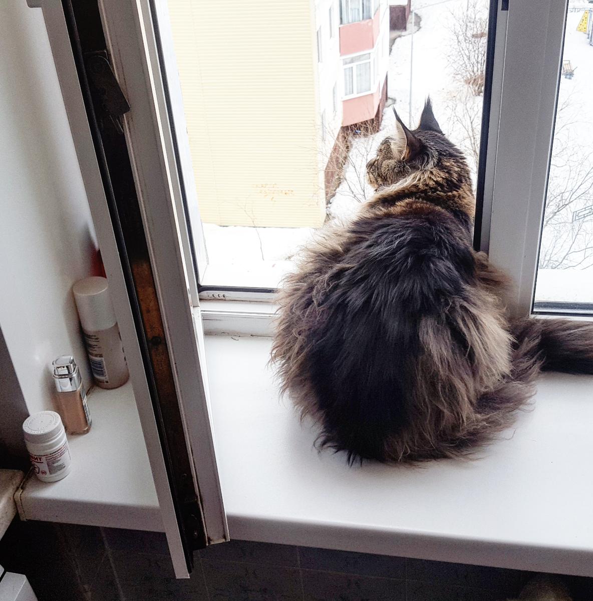 Как определить ушиб лапы у кота?