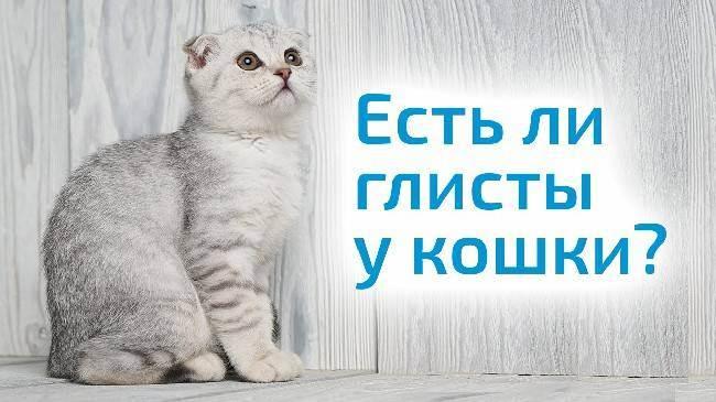 Как правильно проглистогонить кошку в домашних условиях