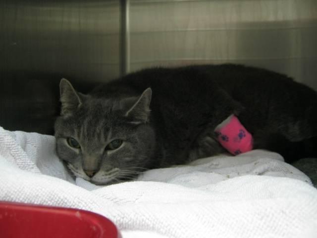 Панкреатит у кошки: что такое, виды, причины развития, первые признаки, лечение
